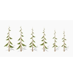 Shabby pine trees vector image vector image