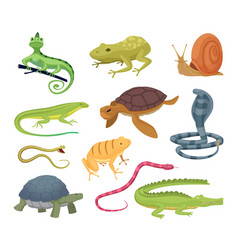 Amphibia and reptiles wild animals turtles vector