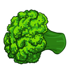 Broccoli icon cartoon style vector