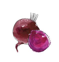 Drawing beet vector