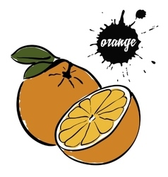 Fruit ripe orange vector