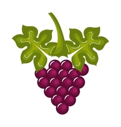 grapes vine isolated icon design vector image