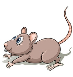 One gray mouse vector