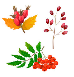 high quality autumn set vector image