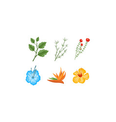 plants and flowers collection design elements vector image