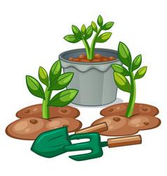 Plants and gardening equipments vector