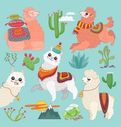 set cute alpaca lama and desert vector image