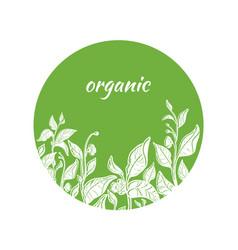 template organic green vector image