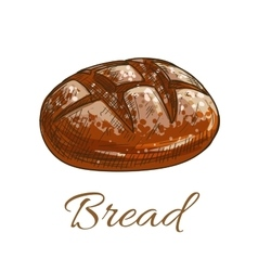 Bread loaf sketch icon for bakery shop vector image