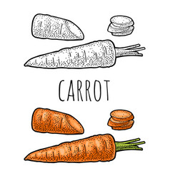 carrots whole half and slice color vector image