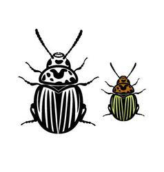 Colorado Potato Beetle vector