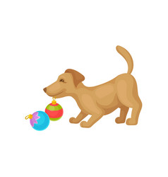 Funny puppy playing with colorful christmas ball vector