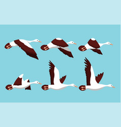motion phases of a birds flight vector image