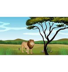Cartoon Lion Scenery vector image