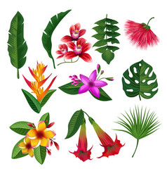 tropical plants hawaii flowers leaves and branches vector image vector image