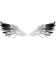 Abstract black and white wings vector