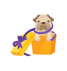 funny pug puppy get out of bright orange gift box vector image