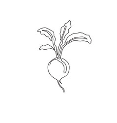 one single line drawing whole healthy organic vector image