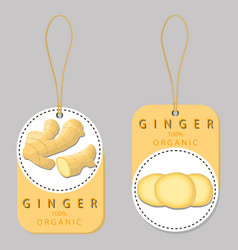 the ginger vector image