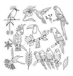 Tropical bird vector