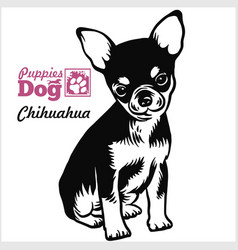 Chihuahua puppy sitting drawing hand sketch vector