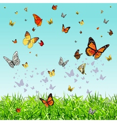 different butterflies flying over the green grass vector image