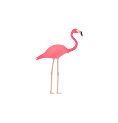 flamingo in flat design tropical bird vector image