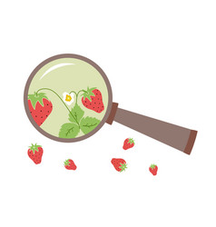 Strawberry under the magnifying isolated vector