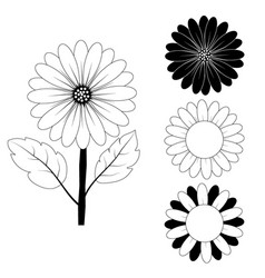 sunflower drawing black and white vector image