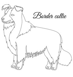 border collie dog outline vector image