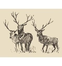 Deers Engraving Vintage Sketch vector