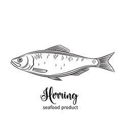 Herring vector