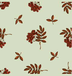 seamless pattern with hand drawn colored rowan vector image