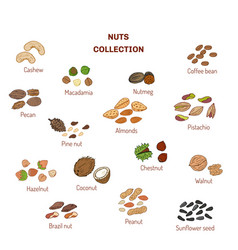 Set of nuts and seeds vector