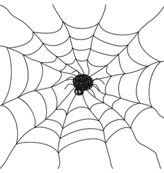 Spider on white background vector image