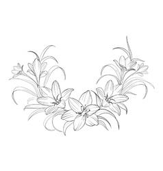 Crocus flowers vector image