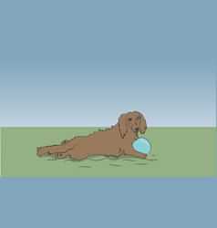 dog dachshund lies on nature vector image