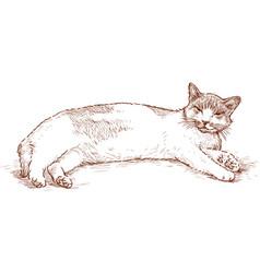 Lazy cat vector