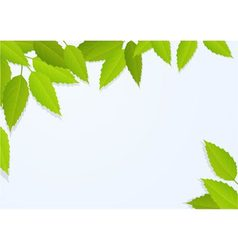 nature background with tree leaves vector image
