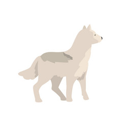 Polar wolf arctic animal on a vector