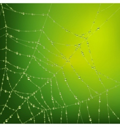 Spider web with water drops vector