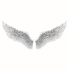Wings angel vector