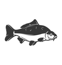 carp fish isolated on white background design vector image