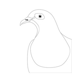 dove head bird lining draw vector image