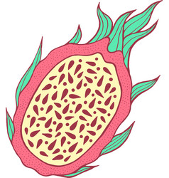 Dragon fruit color isolated arttropical and vector
