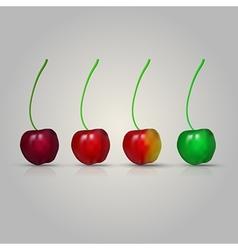 Four cherries vector