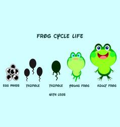 frog life cyclecartoon styleanimals life vector image