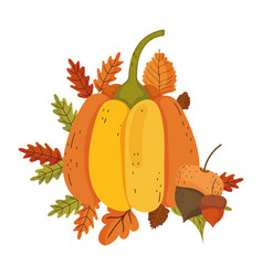 Isolated pumpkin and acorn design vector