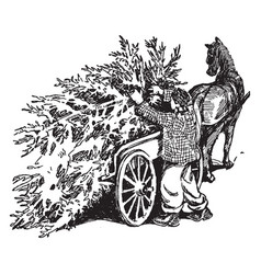 Man with pine tree on cart vintage vector