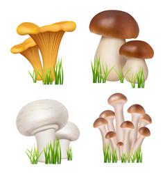 mushrooms realistic healthy natural products vector image